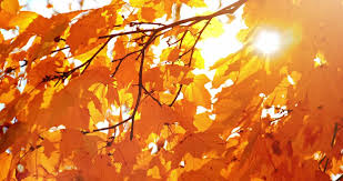 sun shining fall leaves blowing breeze slow motion