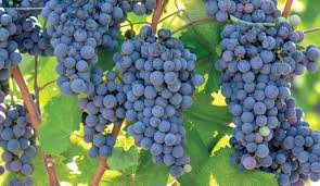 Sonoma Winery Map Best Day Trips Sonoma Wine Country Bay City Guide San