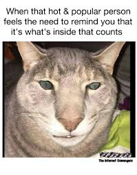 Funny Cat Memes - it s what s inside that counts funny cat meme pmslweb