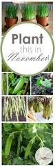 best 25 winter garden ideas on pinterest winter vegetable