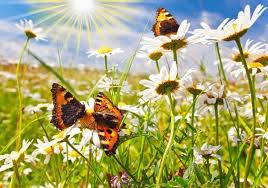 flower and butterfly images free stock photos 11 560
