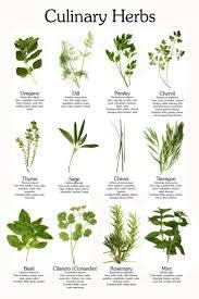best 25 herbs illustration ideas on pinterest plant drawing