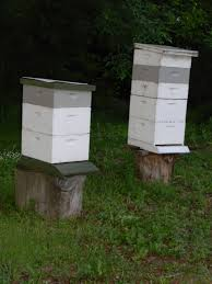 eugene beekeepers support natural beekeeping reporting 1 blog