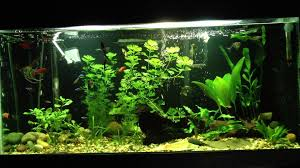 awesome 20 gallon freshwater planted tank tonytanks youtube