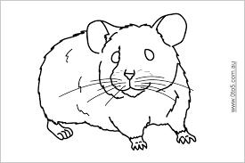 Coloriage De Hamster A Imprimer Dessin Hamster A Imprimer Colorier