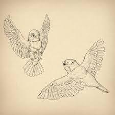north american bird sketches bird sketch sketch drawing and