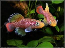 15 list different types of betta fish with pictures betta fish