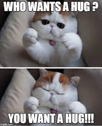 Give Me A Hug Meme - cats need hug imgflip