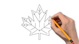 how to draw thanksgiving maple leaf nature pencil to draw step by step youtube