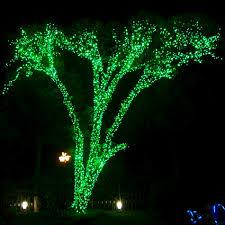 green led tree lights rainforest islands ferry
