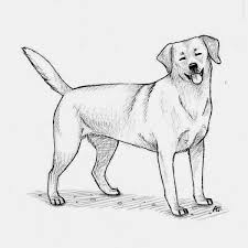 sketch drawings of dogs lol picture collection