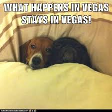Dog In Bed Meme - what happens in vegas stays in vegas i has a hotdog dog