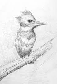 pretty good blog bird pencil drawing kingfisher