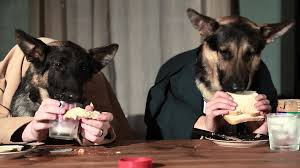 dogs at dinner table odin and pippin try to have dinner together youtube