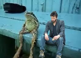 Sitting Meme - sitting frog adviceanimals