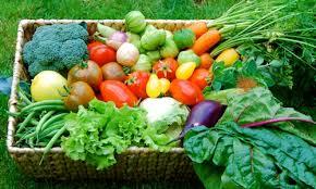 verdura gardens the cellar door