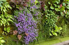 vertical garden history the best plants for walls