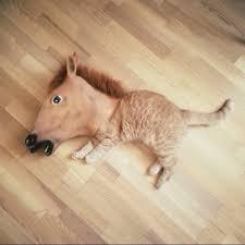 Meme Horse Head - lol why is this soooo funny furry friends