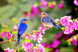 Image result for birds in the spring