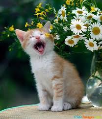 beautiful kittens beautiful kittens cuteimages net