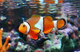 saltwater fish best images collections hd for gadget windows mac