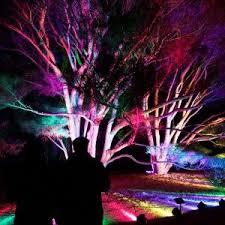 tree lights at the morton arboretum lightswitch morton arboretum