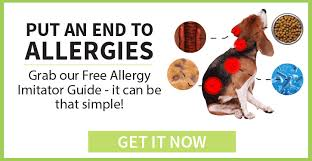 5 signs your dog has food allergies dogs naturally magazine
