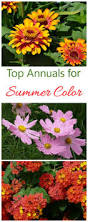 Long Blooming Annual Flowers - summer blooming plants 25 favorites for long season color