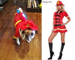 fireman halloween costumes who wore it best pug costumes vs costumes u2013 this pug life