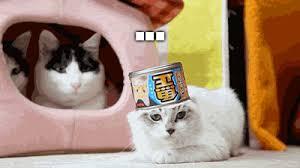 No Meme Cat - cat meme oh hell no gif on imgur