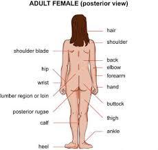 women s women s health symptoms causes diagnosis women s health treatment