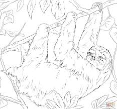 sloth coloring page free printable coloring pages