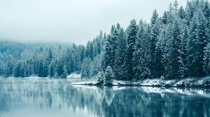 frozen pine forest cool wallpapers