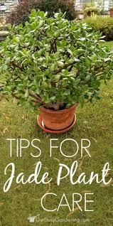 23 Diagrams That Make Gardening by 23 Diagrams That Make Gardening So Much Easier Houseplants