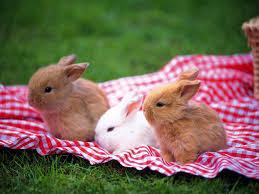 bunny rabbit wallpaper wallpapersafari