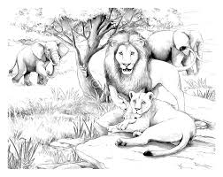 africa lions africa coloring pages for adults justcolor