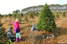 How To Trim A Real Christmas Tree - caring for your real christmas tree bitz u0026 giggles