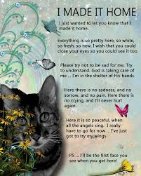 the loss of a pet 181 best images about grief and pet loss on still miss