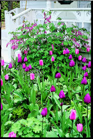 plants native to wisconsin minnesota u0026 wisconsin getting started garden guide by melinda