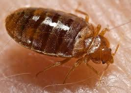 Kansas how do bed bugs travel images Bed bugs kansas city mo jpg