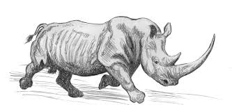 drawn rhino white rhino pencil and in color drawn rhino white rhino