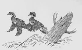 pencil drawings of ducks drawing pencil