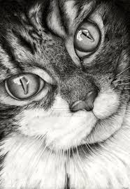 160 best cats images on pinterest drawings cats and animals
