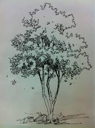 tree renderings hand renderings pinterest sketches drawings