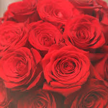 bulk roses wholesale blooms bulk roses