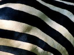 animal pattern photos picture gallery desktop wallpaper