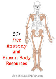 free anatomy and human body resources human body unit studies