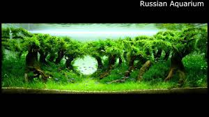 best world aquascape underwater landscapes awesome aquascaping