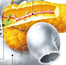 bauchspeicheldrüsenschwäche symptome bauchspeicheldrüse diese diagnose ist ihr todesurteil fast