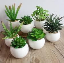 ceramic plant pots ebay